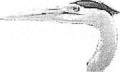 S11heron