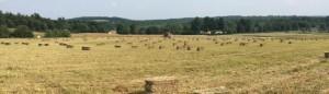 cropped-GF-hay.jpg