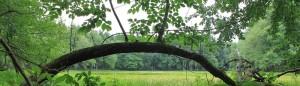 cropped-tree-SW.jpg