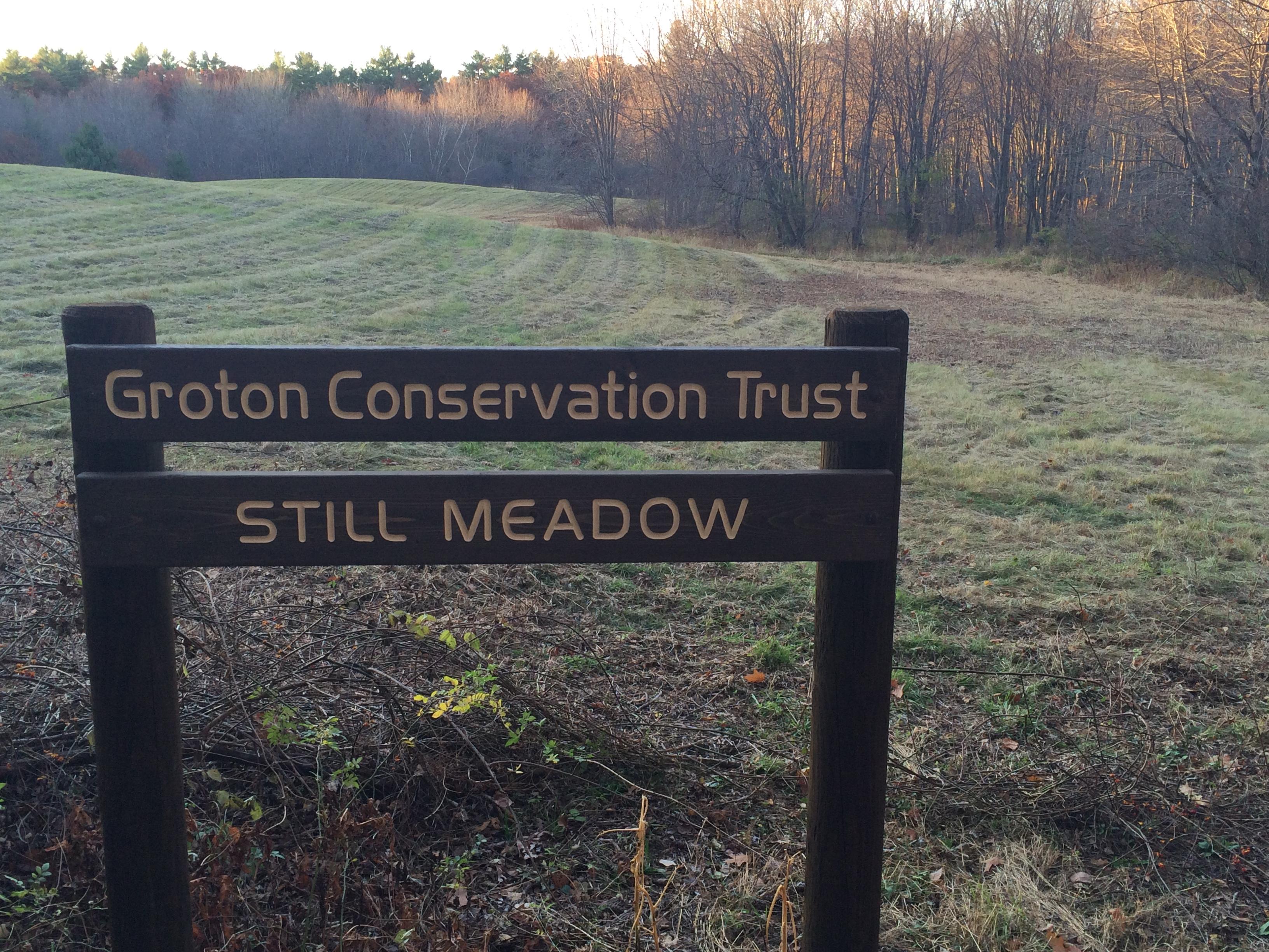 Still Meadow